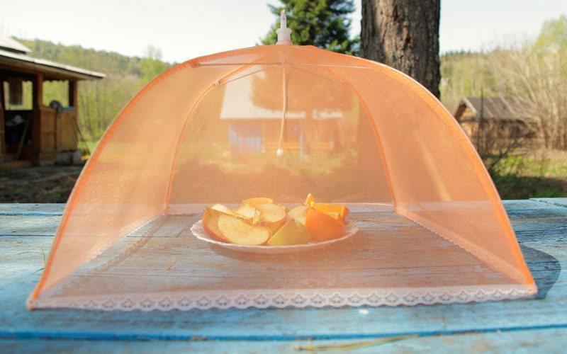 Was kann ich gegen fruchtfliegen tun die besten tipps - Was tun gegen fruchtfliegen im zimmer ...