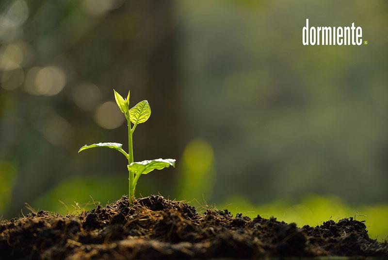 blog-dormiente-nachhaltigkeit