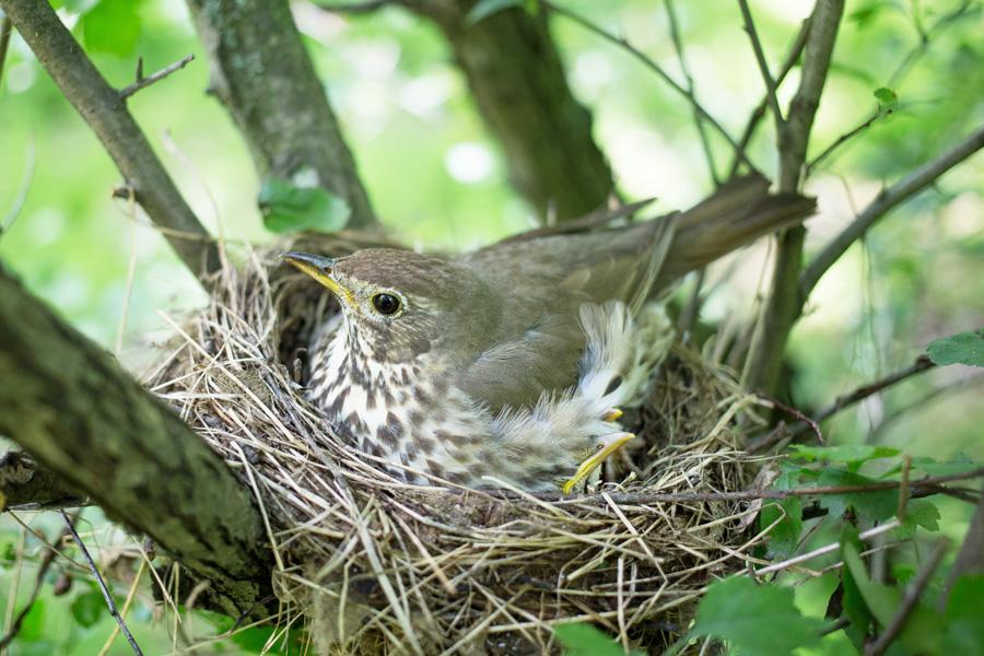 Betten-mit-Nestgefühl