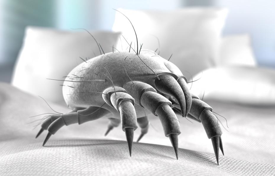 Archivseite_Bettwaren für Allergiker und Veganer_Hausstaubmilbe
