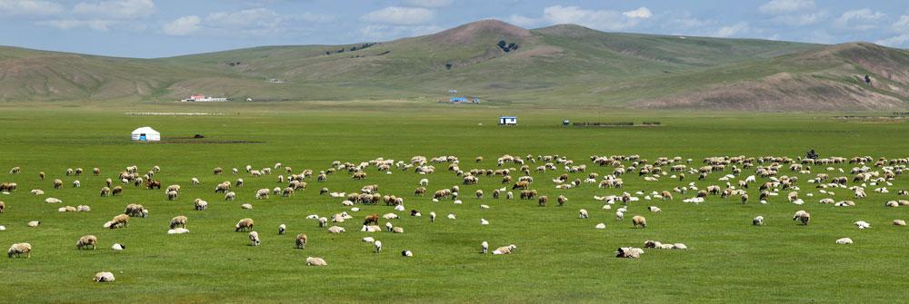 Kategorie Wolldecken & Plaids_mongolische Steppe