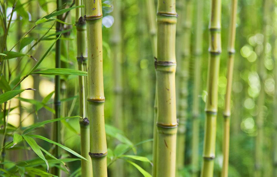 Material_Bambus