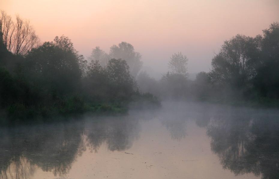 Apfelbaum_Nebel von Avalon