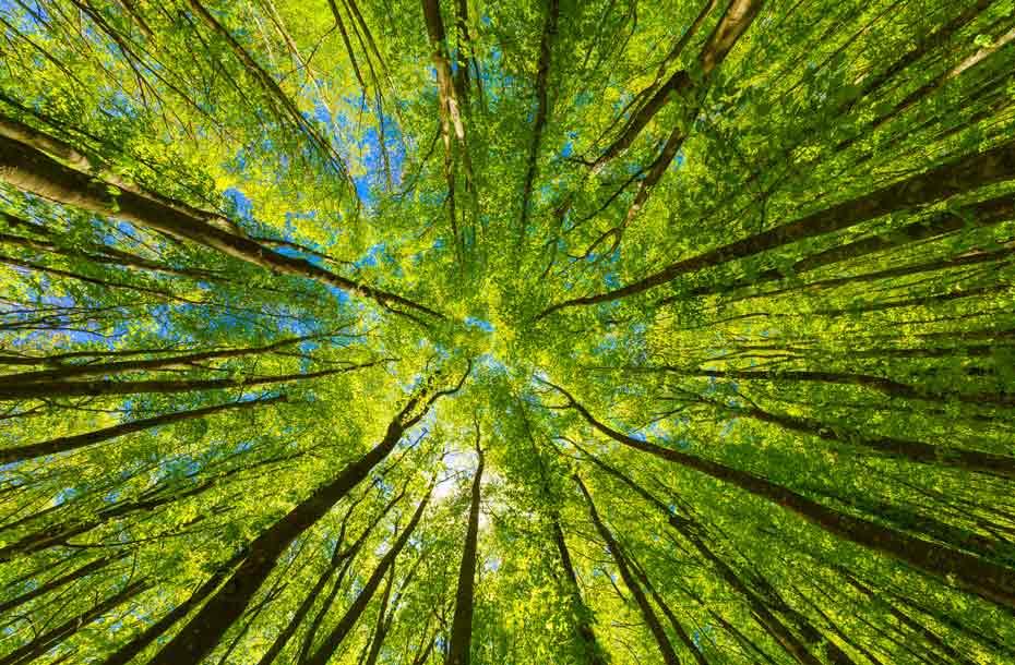 Infoseite_Holz-und-Bäume_Baumrekorde_1