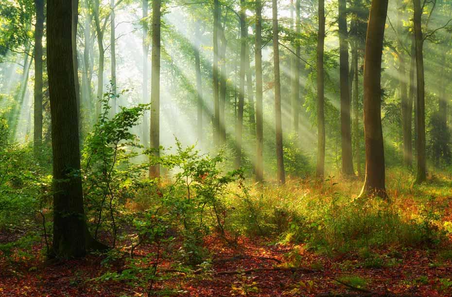 Infoseite_Holz-und-Bäume_Baumrekorde_2