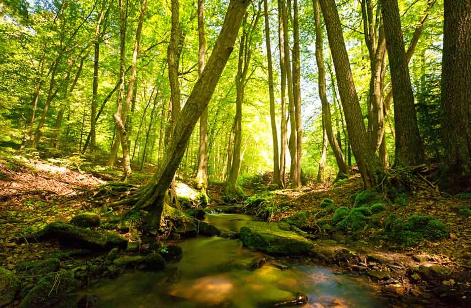 Infoseite_Holz-und-Bäume_Baumrekorde_3