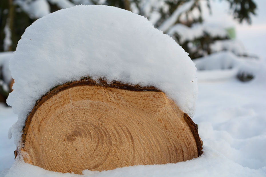Infoseite_Holz-und-Bäume_Mondholz