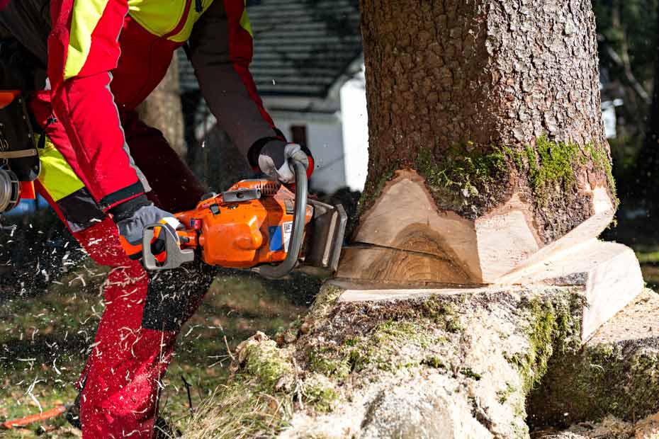 Infoseite_Holz-und-Bäume_nachhaltige Forstwitschaft