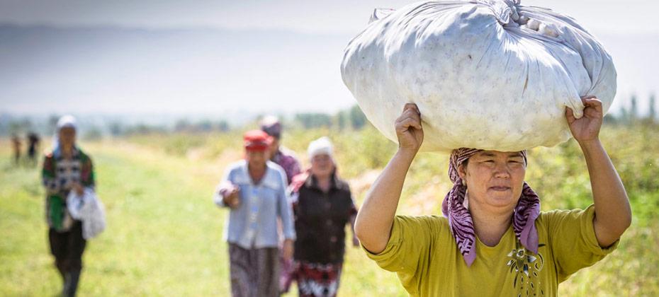 Marke-COTONEA_herstellung-herkunftsland-kirgistan-nach-hause-nach-ernte