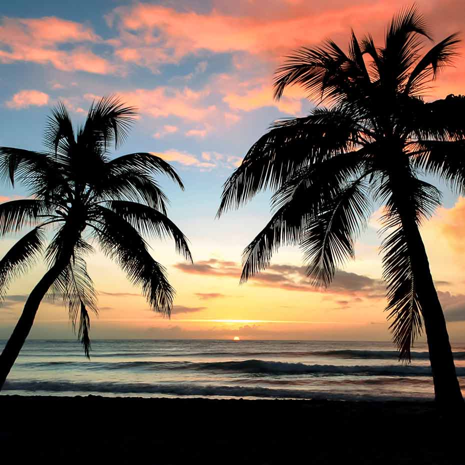 Material_Kokosfaser_Kokospalme-Südsee-Sonnenuntergang