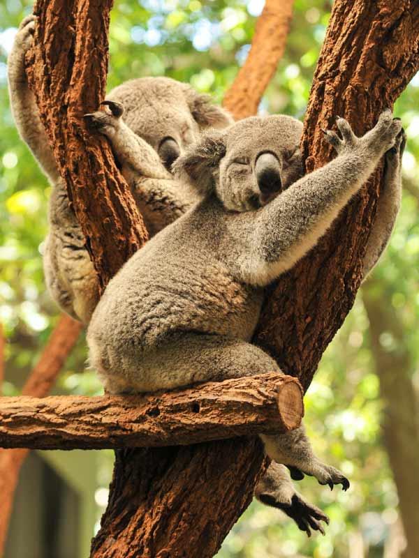 Auch Tiere vermeiden nach Möglichkeit flaches Schlafen.