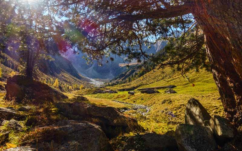 Liebeserklärung an einen Baum_Blog #29_Beitragsbild